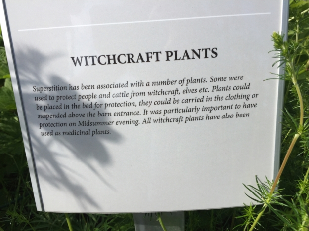 witchcraft plants
