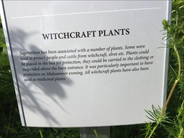 witchcraft plants