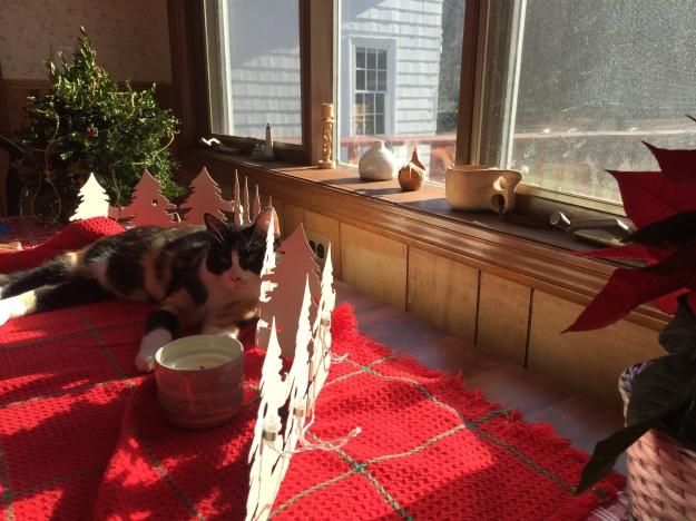 cat in winter sun