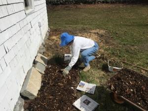 permaculture beginnings